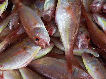 Co skutecznie zabija nasze najsmaczniejsze ryby?