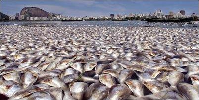 śnięte ryby